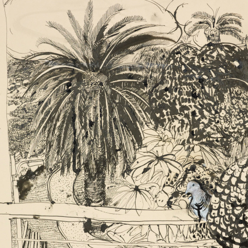 Image: Detail from Brett Whiteley King pigeon, pen and black ink, brush and black ink, wash, gouache, collage, Brett Whiteley Studio Collection